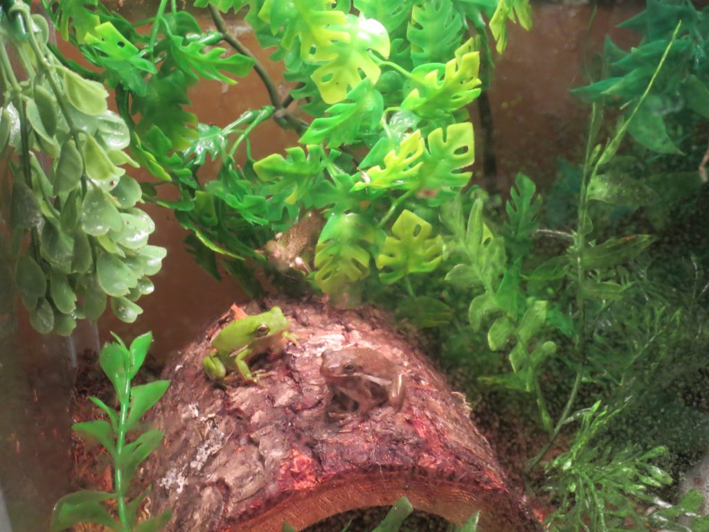 Make A Home Made Terrarium Or A Rainforest Habitat How Things Work